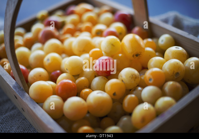 Woodstock New York USA Organic Assorted Heirloom Tomatoes just picked - Stock Image