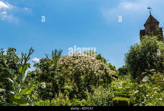 White flowers and blue skies at Sissinghurst Gardens, Kent, UK - Stock Image