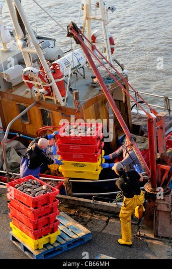 North Sea fishermen unload catch of crabs from fishing boat Onward Star at the East Yorkshire fish quay harbour - Stock Image