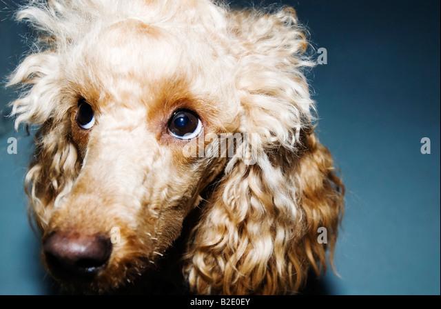 Close up of a dog - Stock-Bilder