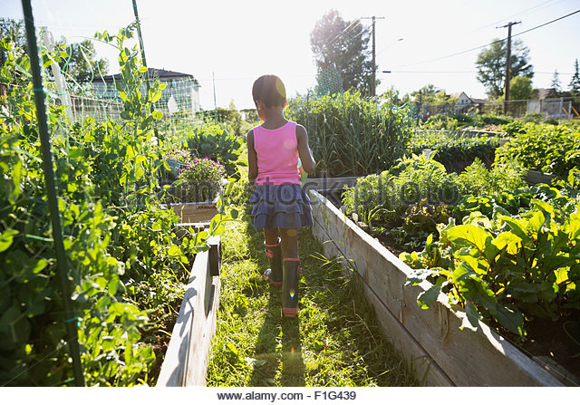 Girl walking in sunny vegetable garden - Stock Image