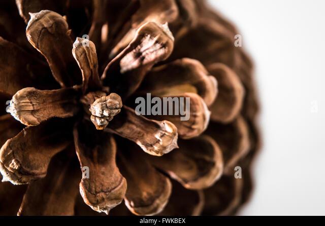 Close-Up Of Pine Cone Over White Background - Stock-Bilder