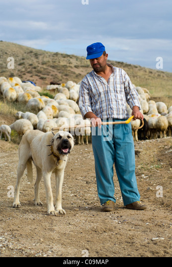 Herdsman Middle East Stock Photos & Herdsman Middle East Stock Images ...
