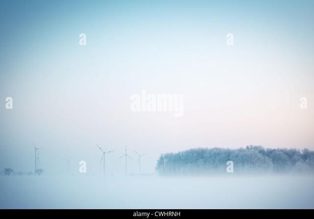 forest,pinwheel,morning fog - Stock Image
