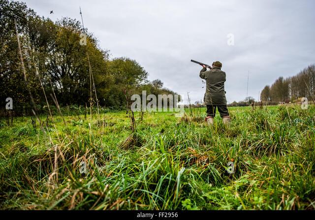 Gun shooting at bird on Driven pheasant shoot, Wiltshire, England, United Kingdom, Europe - Stock Image