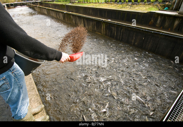 Pisciculture stock photos pisciculture stock images alamy for Trout farm fishing