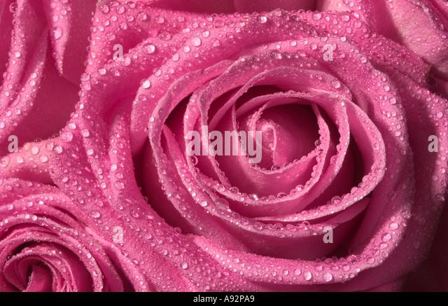 Couleur Rose Stock Photos Couleur Rose Stock Images Alamy