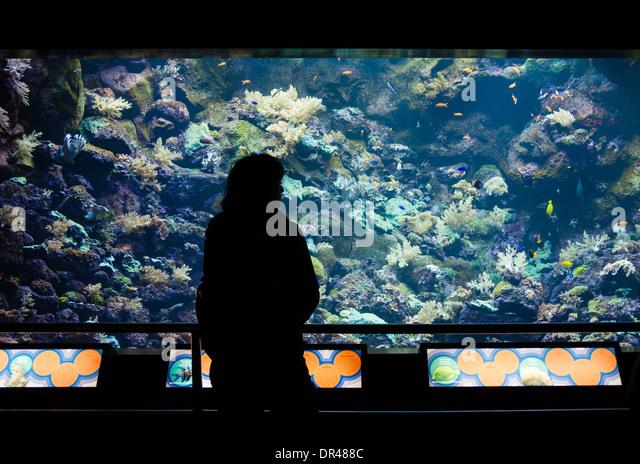 Tourist in Aquarium in Loro Parque, Puero de la Cruz on Tenerife, Canary Islands, Spain - Stock Image