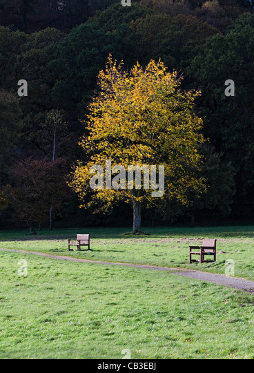 Park in autumn - Stock Image
