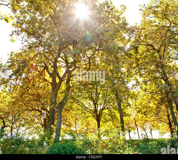 Trees in sunlight - Stock Image