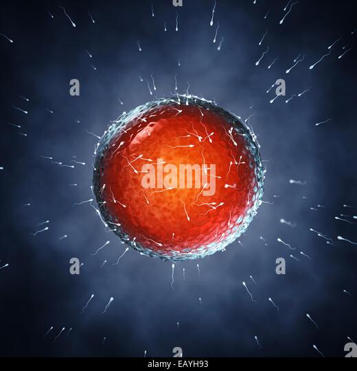 Spermatozoa fertilizing an ovum , Insemination , Fertilization - Stock Image
