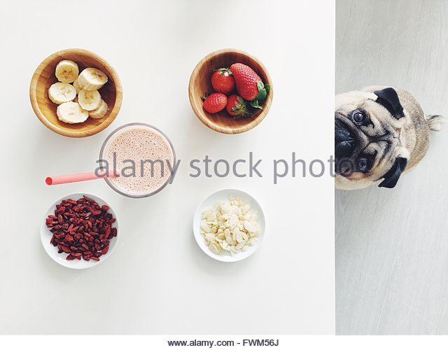Portrait Of Pug By Healthy Food And Drink On White Table - Stock Image