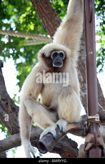 gibbon single women Should you change your name after marriage  a single woman,  i retained the name gibbon and laughed for the first time in a long time when the.