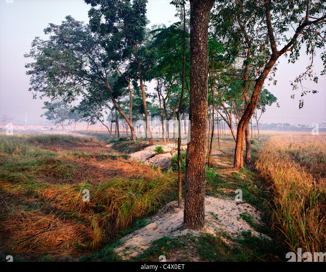 Trees and Fields near Saidpur, Bangladesh - Stock Image