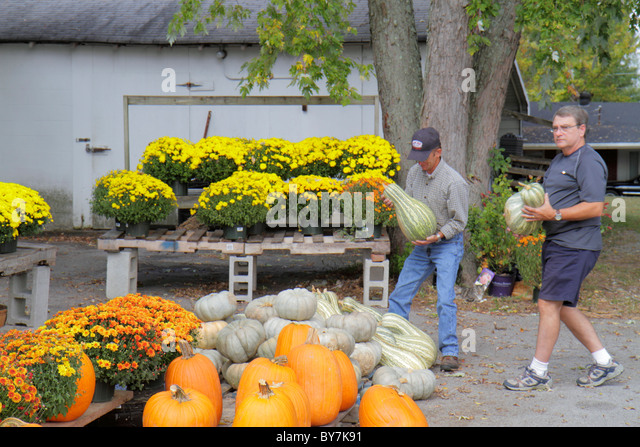 Tennessee Smithville farm stand agriculture vegetables flowers pumpkin mums shopping man Autumn harvest fall display - Stock Image