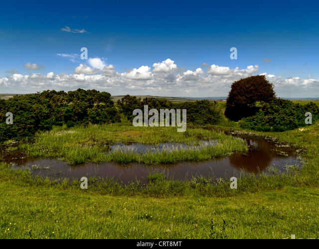 Dew pond on the South Downs Way, South Downs National Park, near Brighton, Falmer and Lewes, Sussex - Stock Image