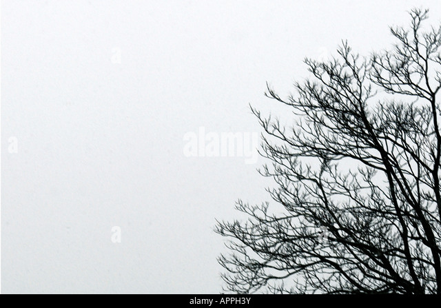 Monochromatic Scene of Bare Trees Silhouetted Against a Winter Sky Copy Space - Stock Image