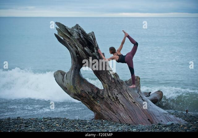 Mature woman practicing yoga position on large driftwood tree trunk at beach - Stock Image