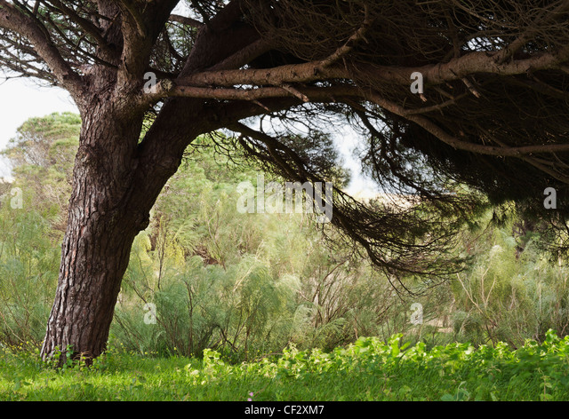 A Large Tree Shadowing The Plants Below; Tarifa Cadiz Andalusia Spain - Stock Image