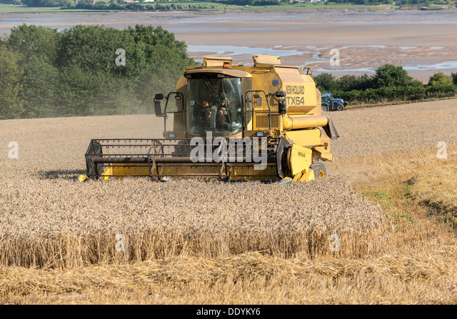 Combine harvester in field on bank of River Severn at low tide gloucestershire England UK. Late summer - Stock Image