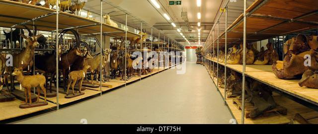 Natural History Museum Storeroom - Stock Image
