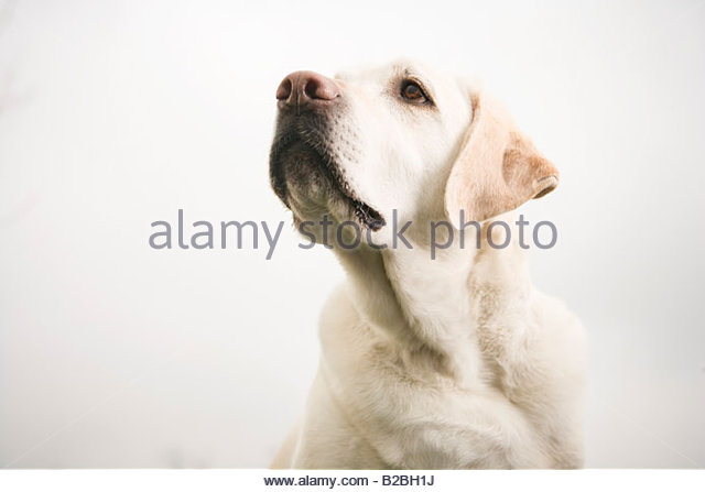Close up of dog - Stock Image