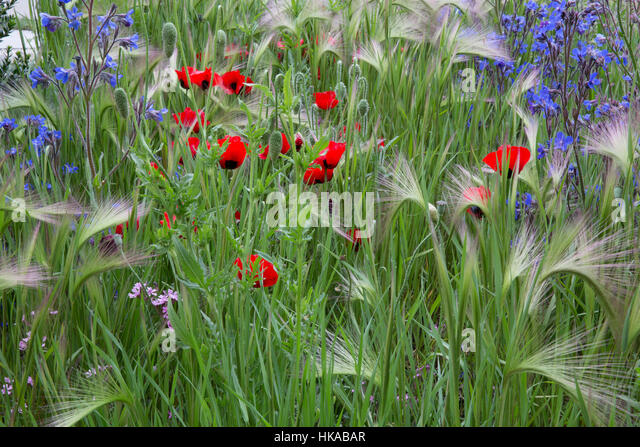 Hugo bugg stock photos hugo bugg stock images alamy - Royal flower show ...