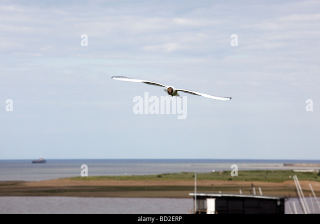 A seagull soars above the sea in a blue sky - Stock Image
