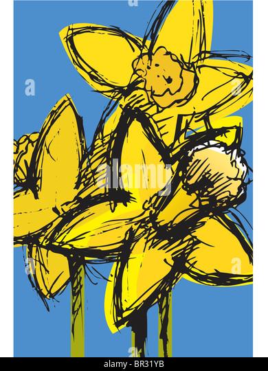 daffodils - Stock-Bilder