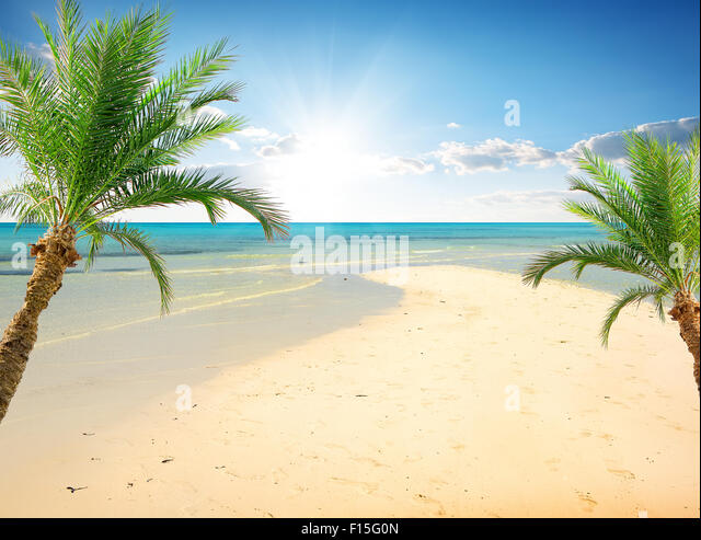 Palms on the beach near sea in sunny day - Stock Image
