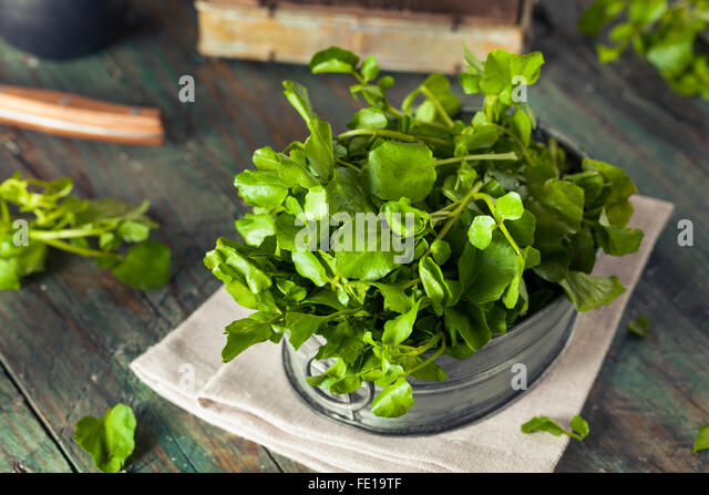 Raw Organic Green Watercress Ready to Use - Stock Image