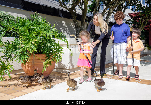 Orlando Florida International Drive The Peabody Orlando hotel Duck March woman girl boy boys children employee job - Stock Image