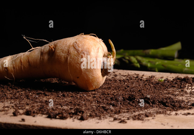 Raw parsnip - Stock Image