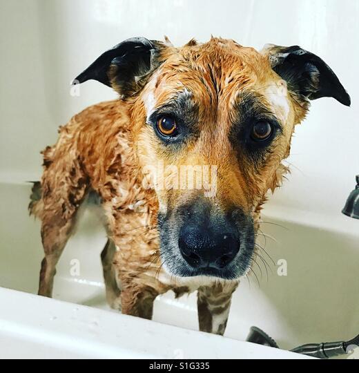 Dog bath - Stock-Bilder