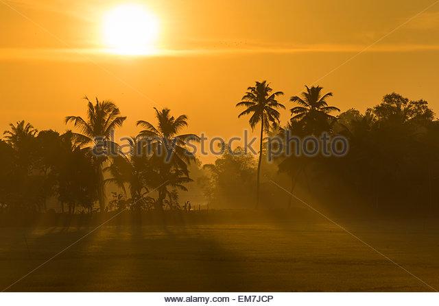 Early morning with the rising sun, palm trees, backwaters, Kerala, Malabar Coast, South India, India - Stock Image