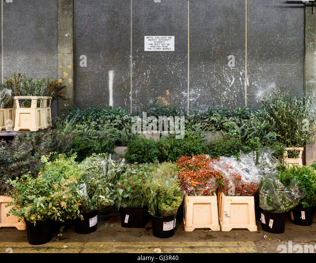 Plants in the flower market. New Covent Garden Market, London, United Kingdom. Architect: -, 1974. - Stock Image