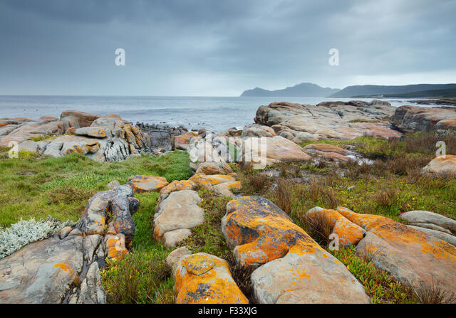 the Cape of Good Hope at Black Rocks, Cape Point, South Africa - Stock Image