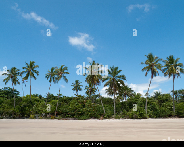 Palm trees on beach, Boipeba Island, Bahia, Brazil - Stock Image