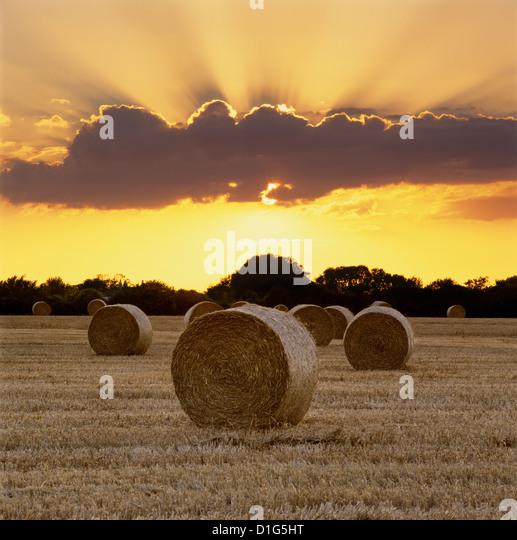 Hay bales at sunset, East Sussex, England, United Kingdom, Europe - Stock Image