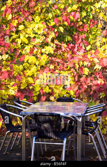 Blue Field Tea Gardens Cafe And Restaurant