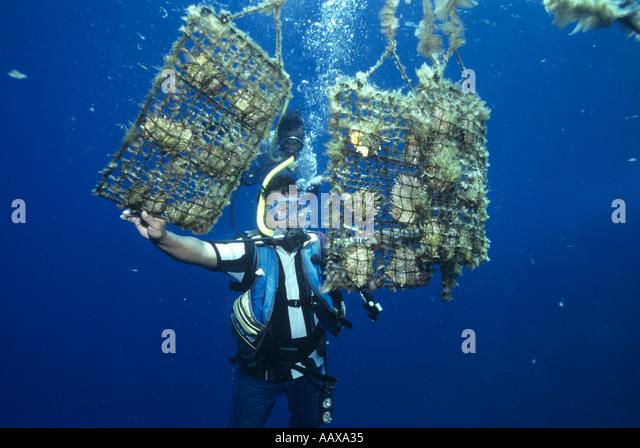Pearl Divers farming black pearls - Stock Image