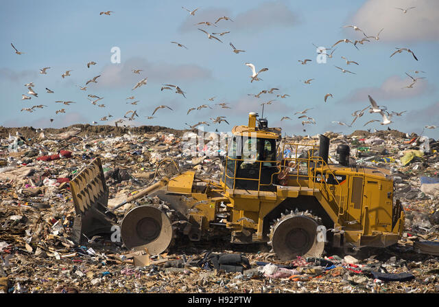 Trashmaster moving garbage in an active landfill cell at Shepard Waste Management Facility with gulls flying overhead - Stock Image