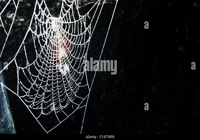 Frozen Spiders Web on a black background on a frosty cold morning. - Stock-Bilder