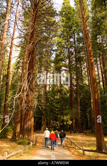 Yosemite Falls walking trail to falls basin waterfall - Stock Image