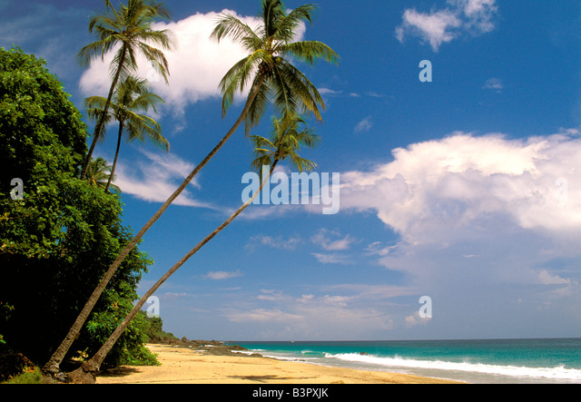 Ideal perfect iconic tropical sand beach with palm trees, blue sky, green water, nobody copy space text space open - Stock Image