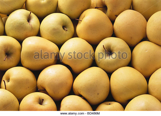 Lots of Golden Delicious apples - Stock Image
