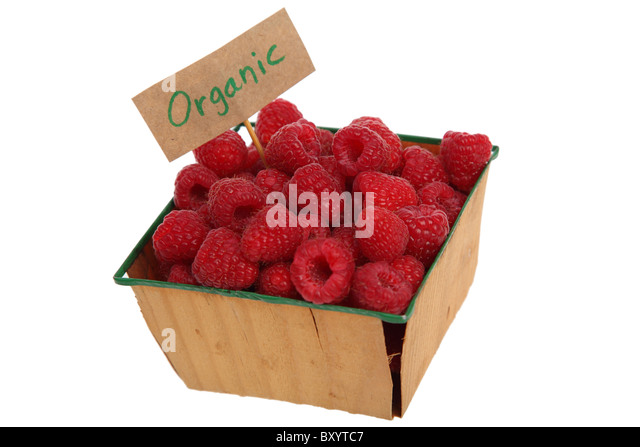 Raspberries with 'Organic' sign on white background - Stock Image