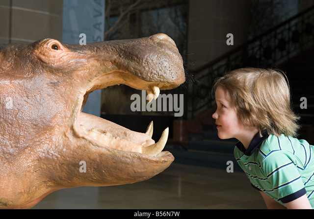 Boy looking at a stuffed rhino - Stock Image