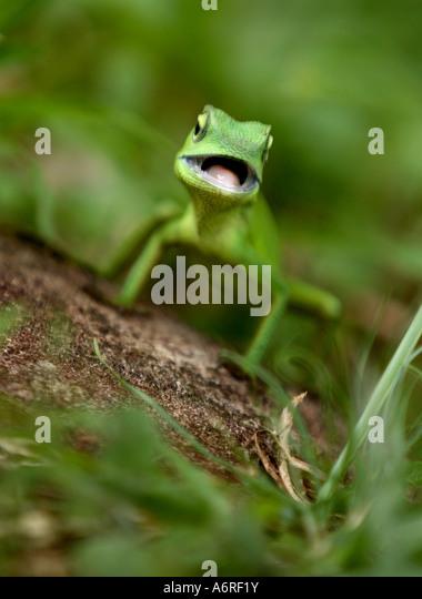 Gecko Stock Photos Amp Gecko Stock Images Alamy