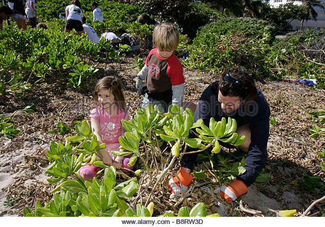 Miami Beach Florida Surfrider Foundation exotic invasive species plant removal coastal volunteer ecology non-native - Stock Image